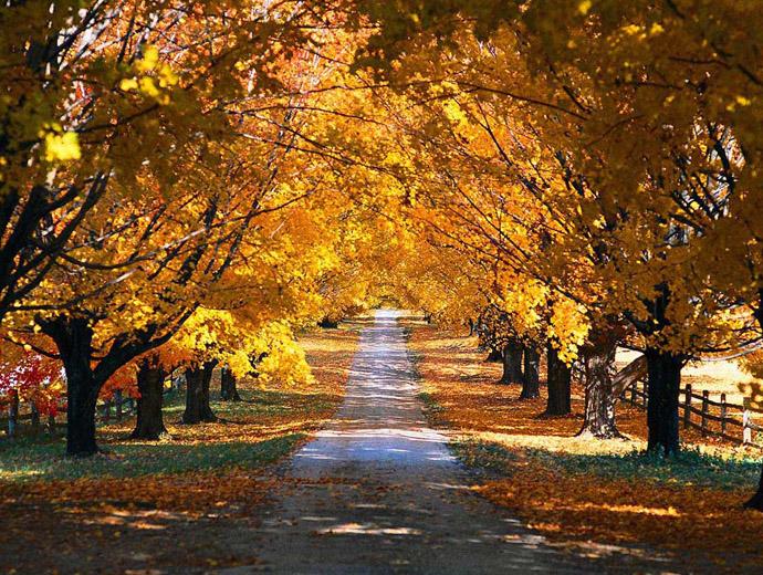 Път през есента. Типичната за този сезон разноцветна покривка!