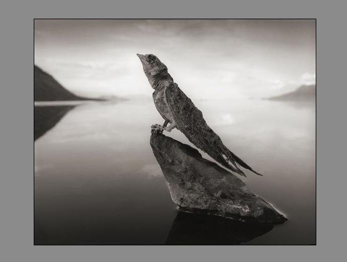 Калцирана птица в езерото Натрон, Танзания