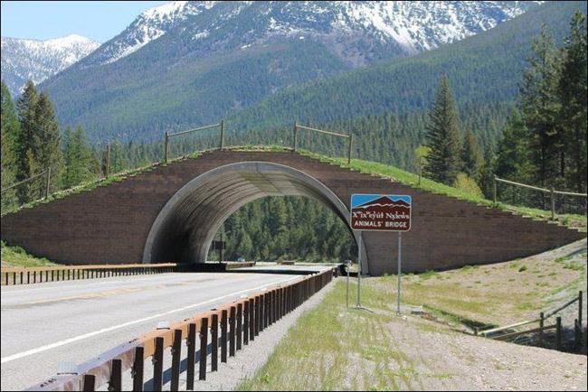 Мост за животни от близо - Индиански резерват Флатхед, Съединени щати