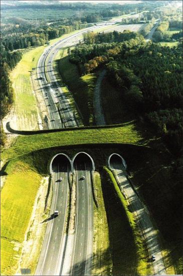 Път за диви животни над магистрала A50 в Холандия