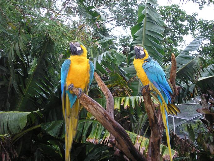 Част от колоритните обитатели на Птичния парк, Игуасу